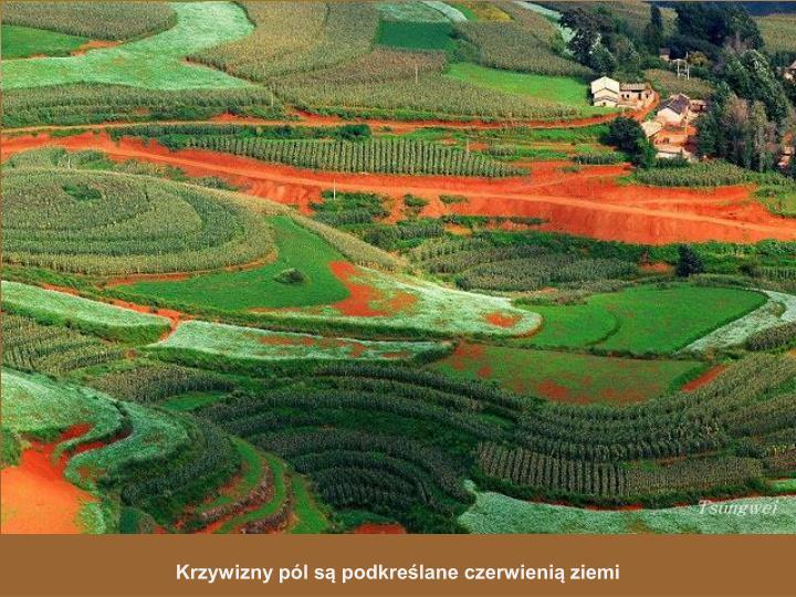 Krzywizny pól są podkreślane czerwienią ziemi