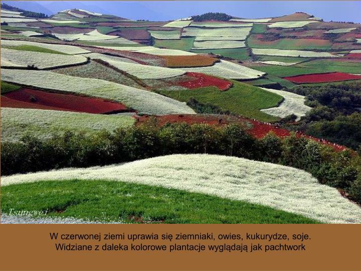 W czerwonej ziemi uprawia się ziemniaki, owies, kukurydze, soje.
