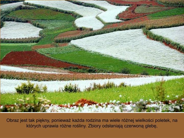 Obraz jest tak piękny, ponieważ każda rodzina ma wiele różnej wielkości poletek, na których uprawia różne rośliny. Zbiory odsłaniają czerwoną glebę,