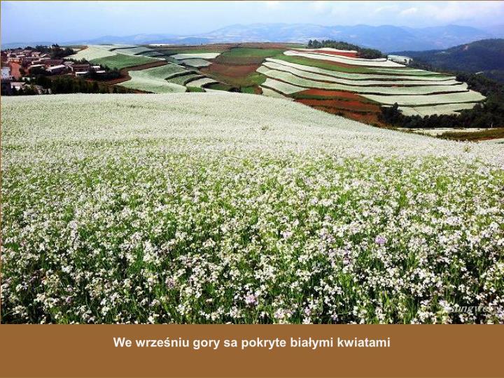We wrześniu gory sa pokryte białymi kwiatami