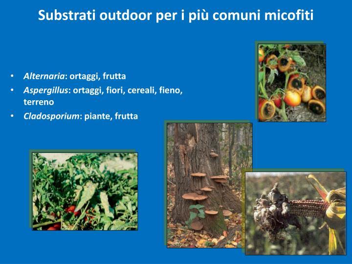 Substrati outdoor per i più comuni micofiti