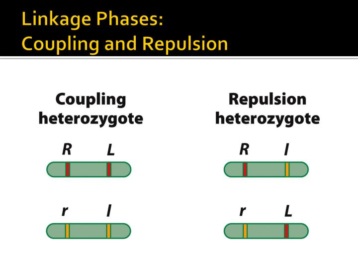 Linkage Phases: