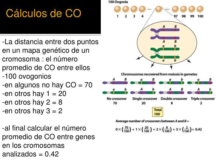 Cálculos de CO