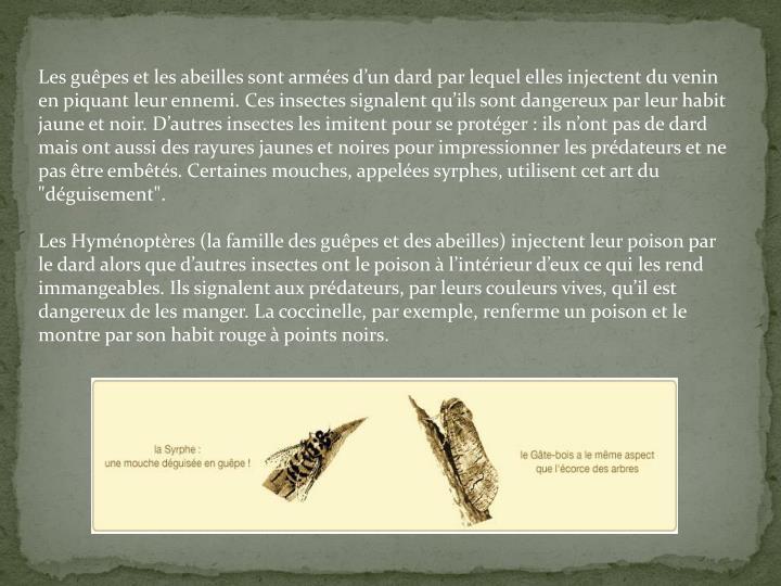 """Les guêpes et les abeilles sont armées d'un dard par lequel elles injectent du venin en piquant leur ennemi. Ces insectes signalent qu'ils sont dangereux par leur habit jaune et noir. D'autres insectes les imitent pour se protéger: ils n'ont pas de dard mais ont aussi des rayures jaunes et noires pour impressionner les prédateurs et ne pas être embêtés. Certaines mouches, appelées syrphes, utilisent cet art du """"déguisement""""."""