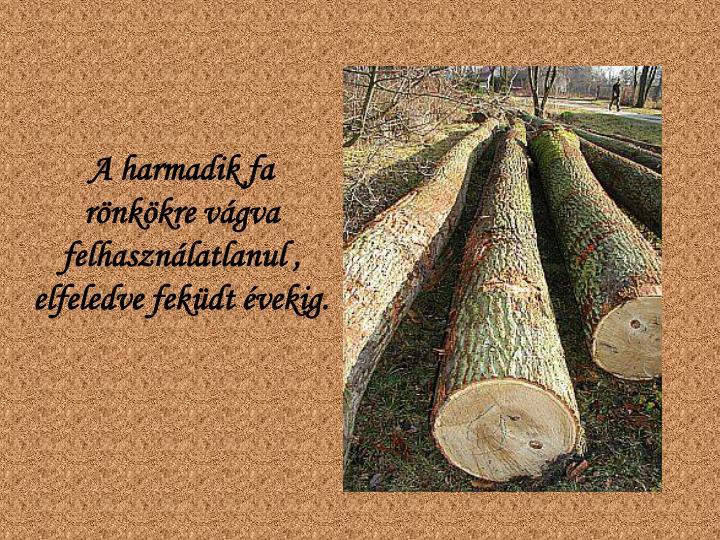 A harmadik fa rönkökre vágva felhasználatlanul , elfeledve feküdt évekig.
