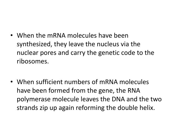 When the mRNA molecules have been synthesized, they leave the nucleus via the nuclear pores and carry the genetic code to the