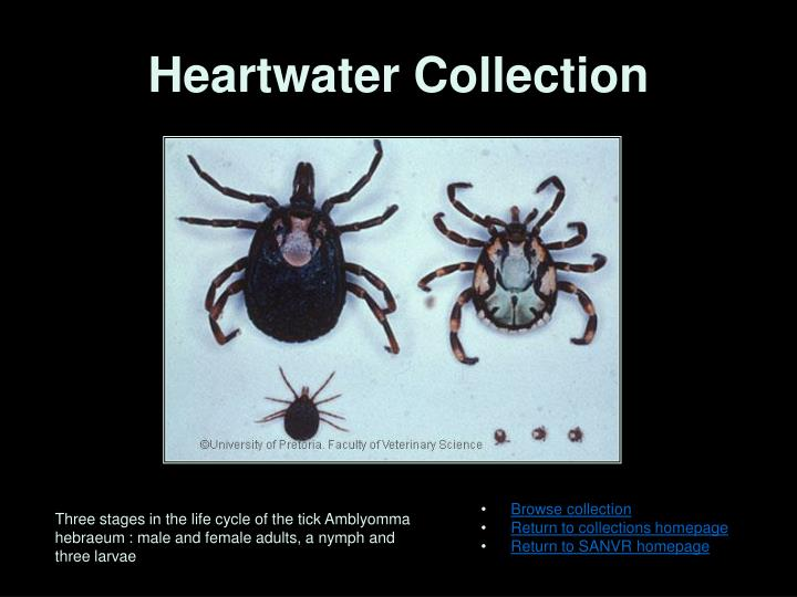 Heartwater Collection