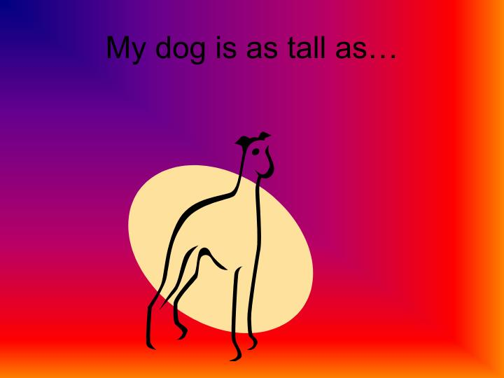 My dog is as tall as…