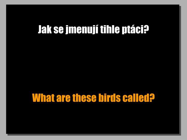 Jak se jmenuj tihle ptci?