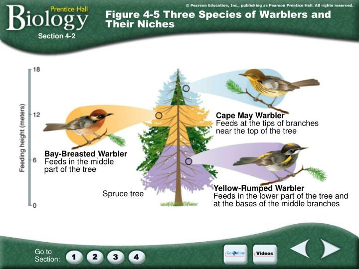 Figure 4-5 Three Species of Warblers and Their Niches