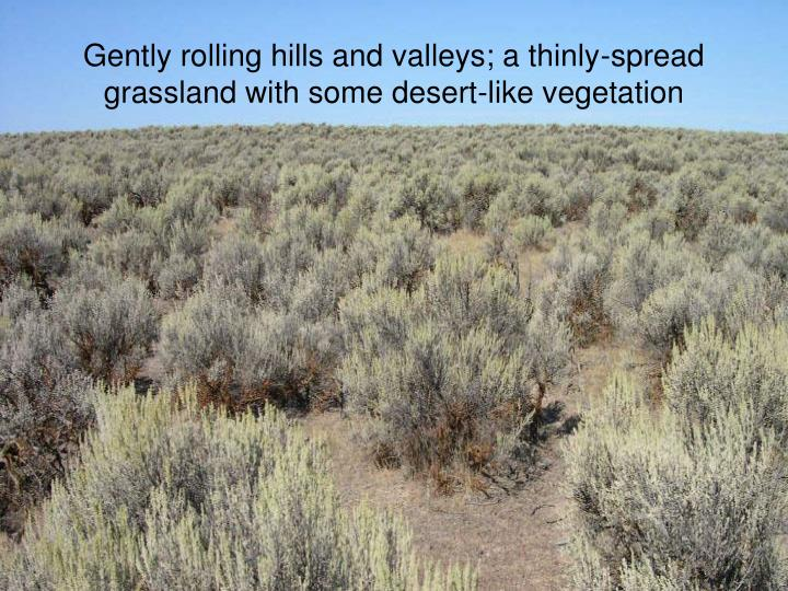 Gently rolling hills and valleys; a thinly-spread grassland with some desert-like vegetation