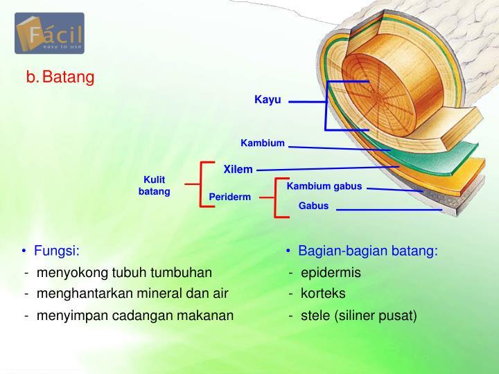 b.Batang