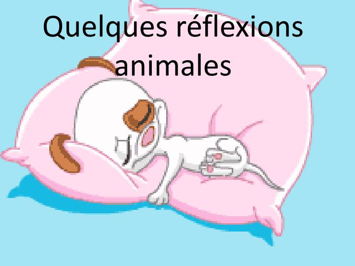 Quelques r flexions animales