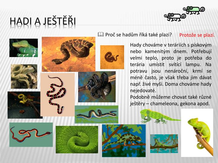 Hadi a ještěři