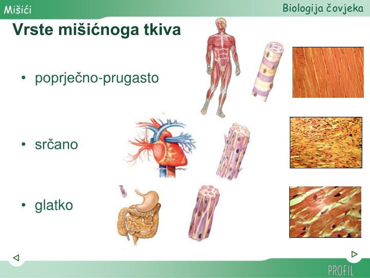 Vrste mišićnoga tkiva