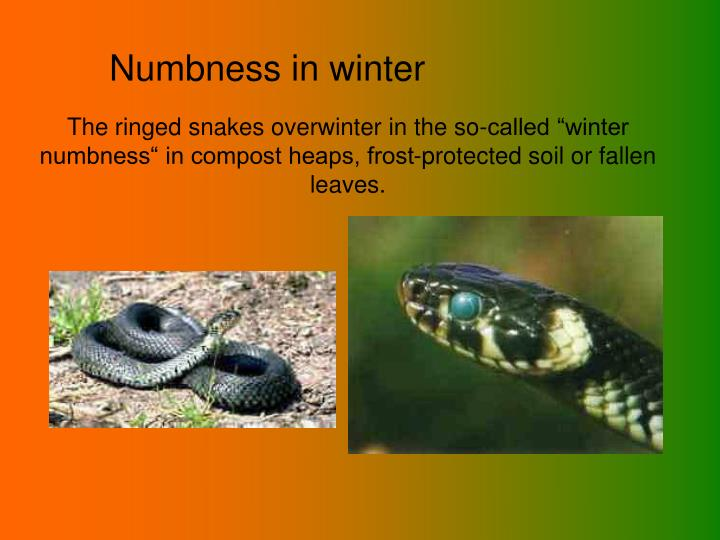 Numbness in winter