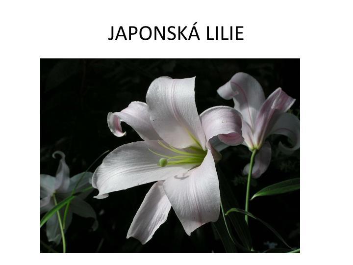 JAPONSKÁ LILIE