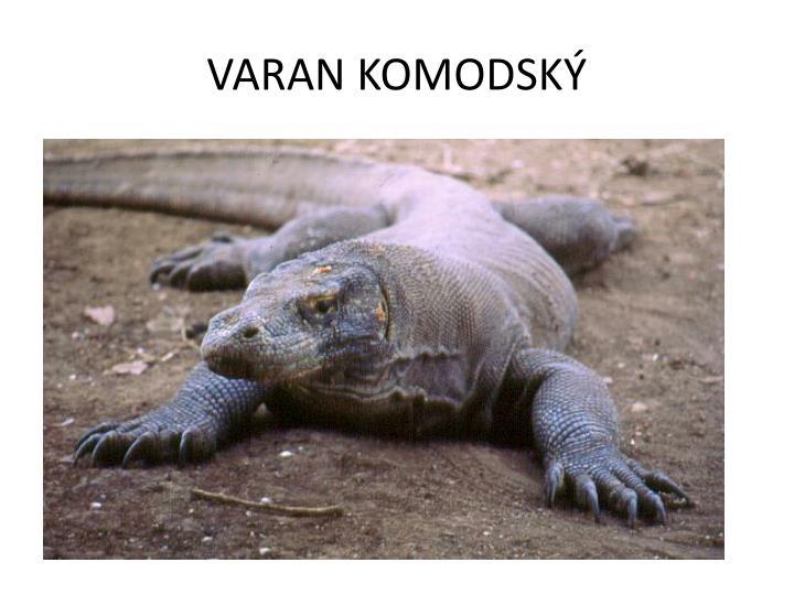 VARAN KOMODSKÝ
