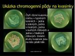 uk zka chromogenn p dy na kvasinky