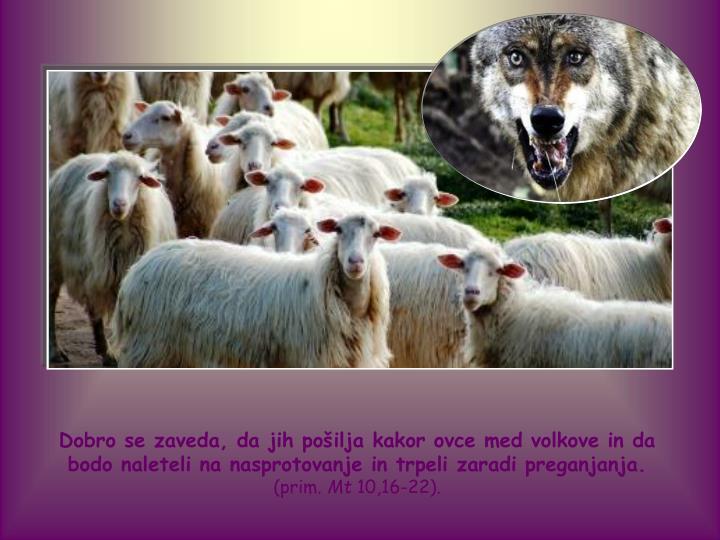 Dobro se zaveda, da jih pošilja kakor ovce med volkove in da bodo naleteli na nasprotovanje in trpeli zaradi preganjanja.