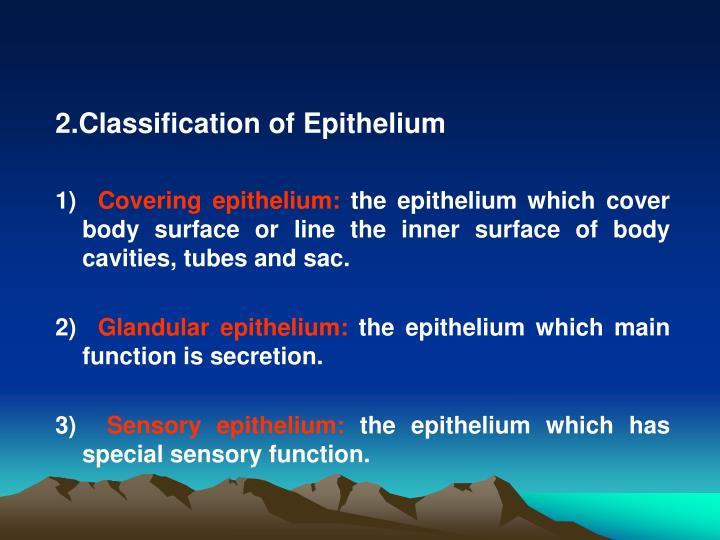 2.Classification of Epithelium
