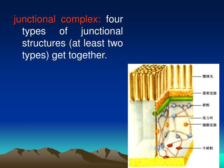junctional complex: