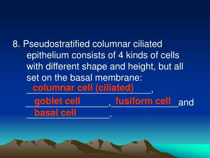 8. Pseudostratified columnar ciliated epithelium consists of 4 kinds of cells with different shape and height, but all set on the basal membrane: ________________________,