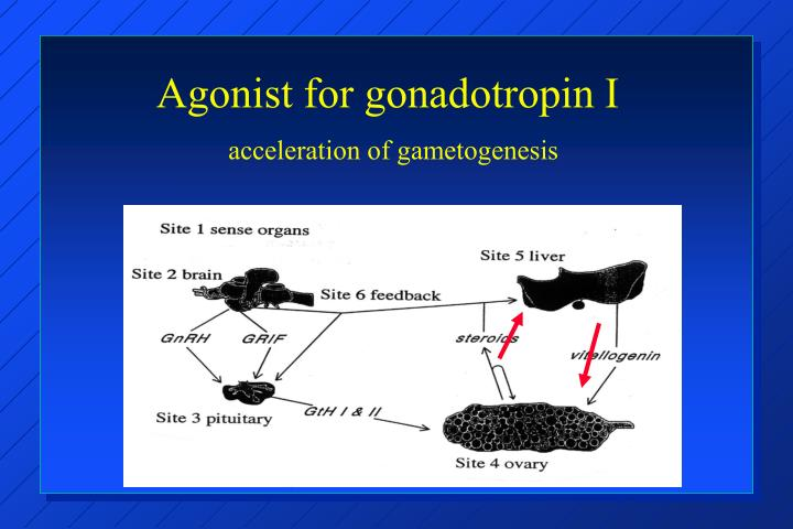 Agonist for gonadotropin I