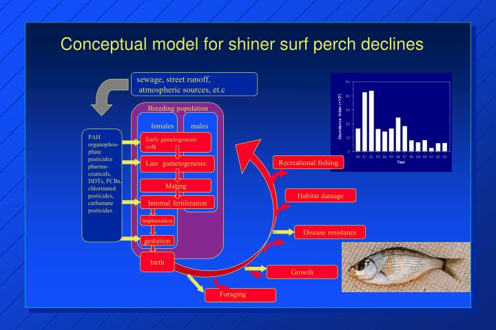 Conceptual model for shiner surf perch declines