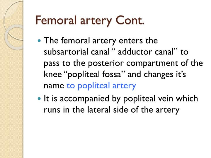 Femoral artery Cont.
