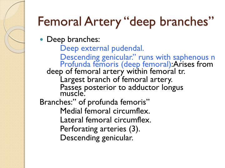 "Femoral Artery ""deep branches"""