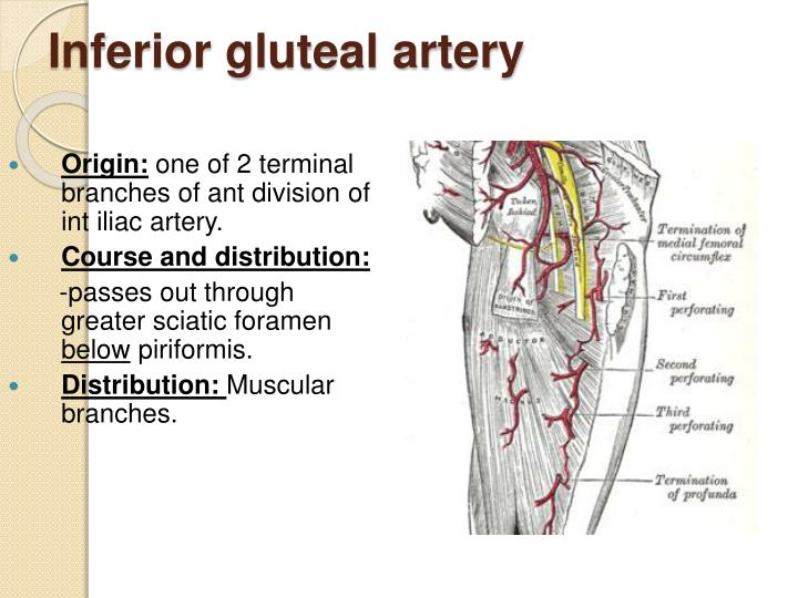 Inferior gluteal artery