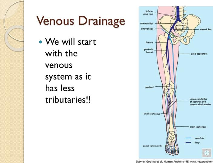 Venous drainage