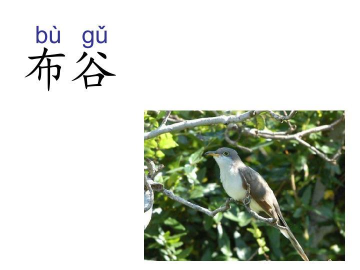 bù   gǔ