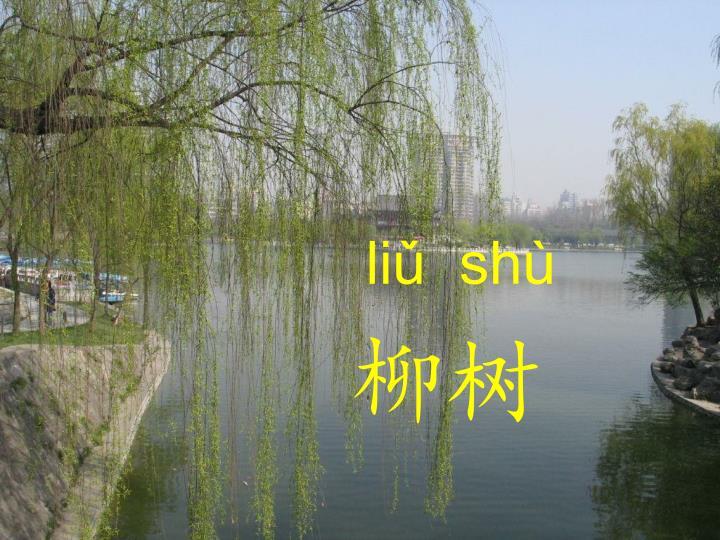 liǔ  shù