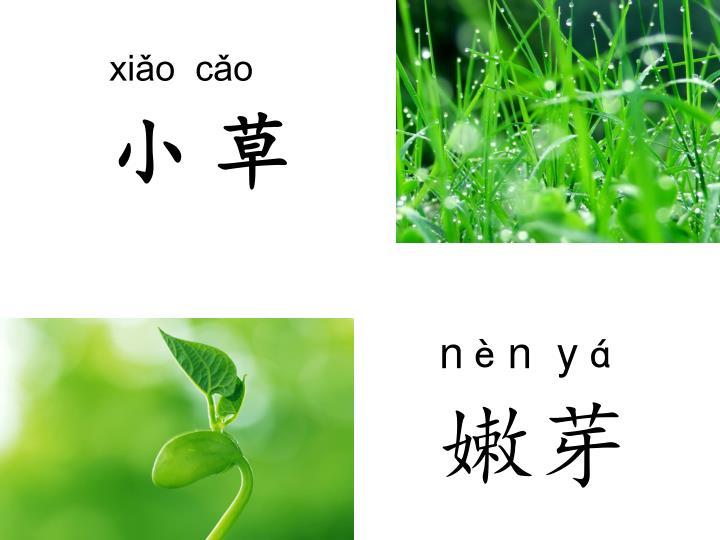 xiǎo  cǎo
