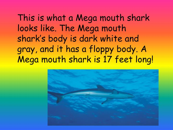 This is what a Mega mouth shark looks like. The Mega mouth shark's body is dark white and gray, an...