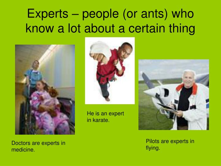 Experts – people (or ants) who know a lot about a certain thing