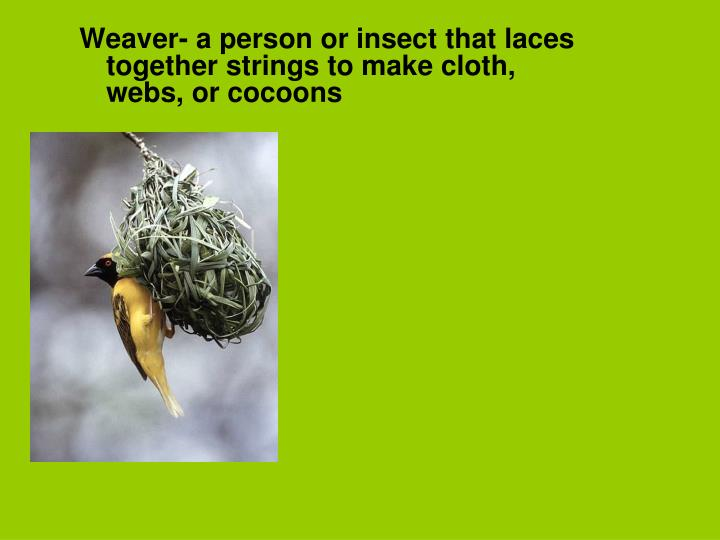 Weaver- a person or insect that laces together strings to make cloth, webs, or cocoons
