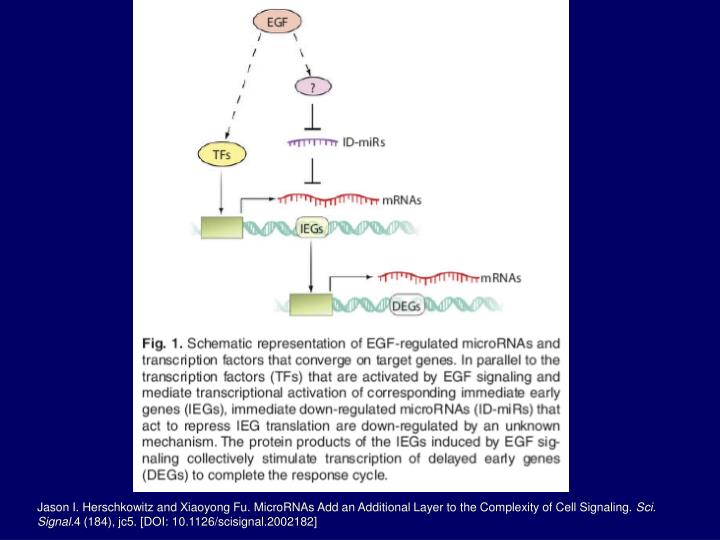 Jason I. Herschkowitz and Xiaoyong Fu. MicroRNAs Add an Additional Layer to the Complexity of Cell Signaling.