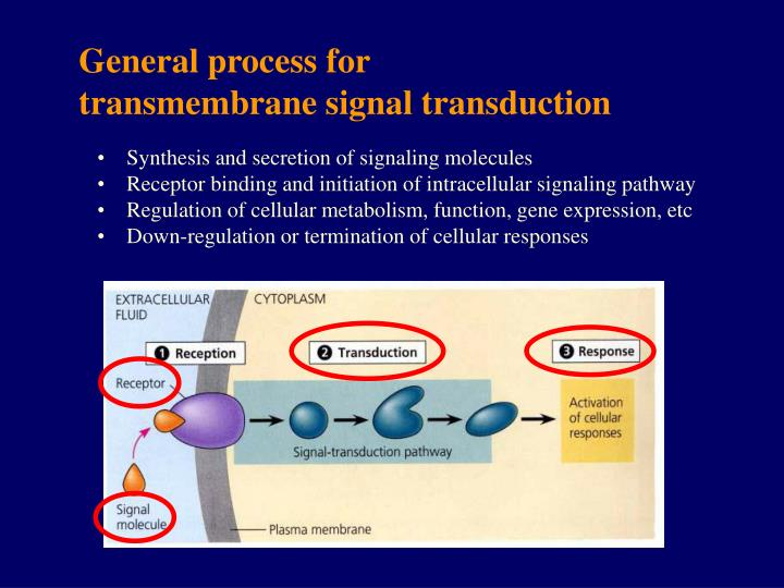 General process for