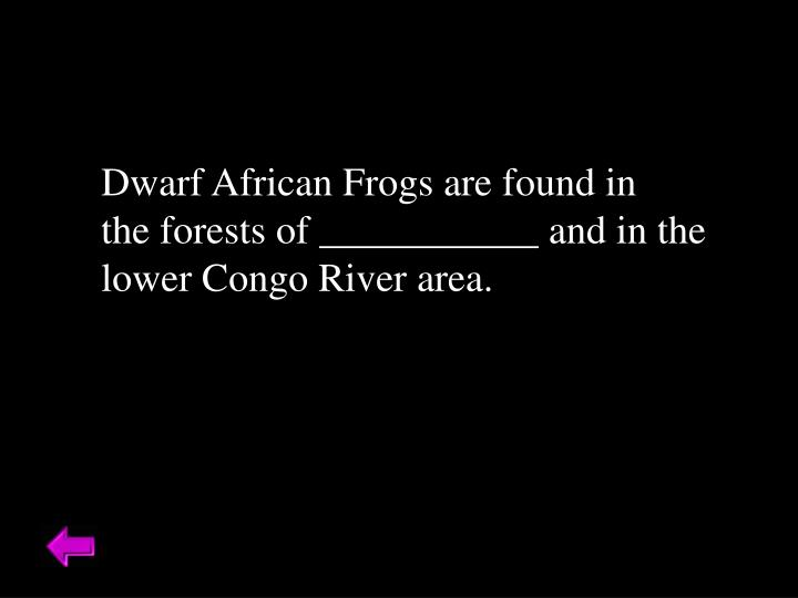 Dwarf African Frogs are found in