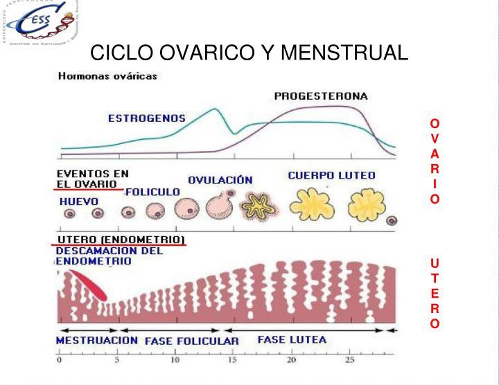 CICLO OVARICO Y MENSTRUAL
