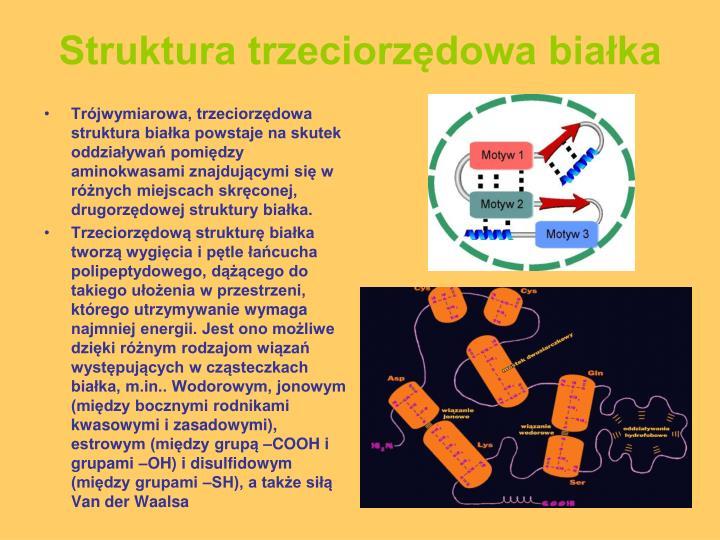 Struktura trzeciorzędowa białka