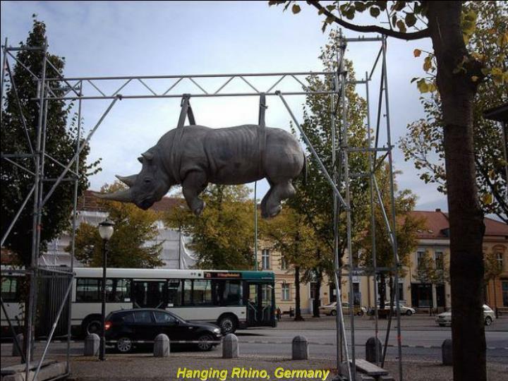 Hanging Rhino, Germany