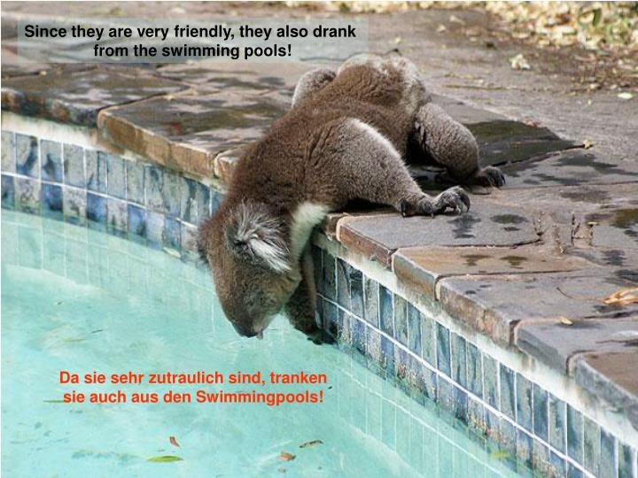 Since they are very friendly, they also drank