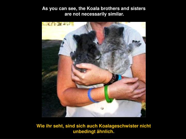 As you can see, the Koala brothers and sisters