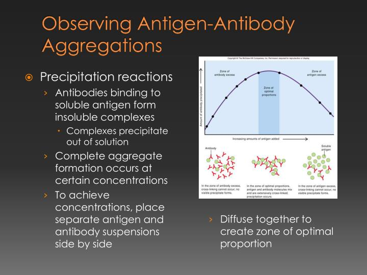 Observing Antigen-Antibody Aggregations