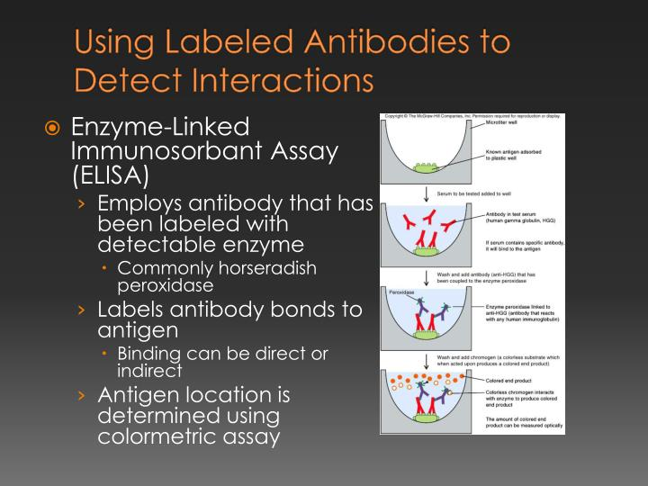 Using Labeled Antibodies to