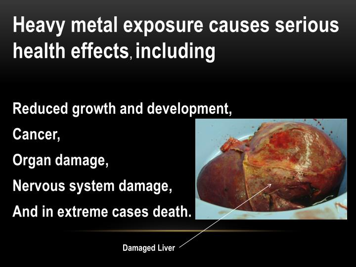 Heavy metal exposure causes serious health effects